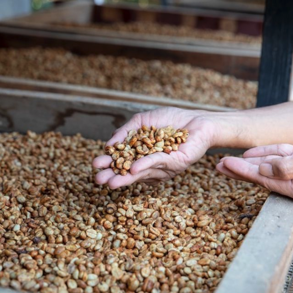 How coffee producers can improve their social media